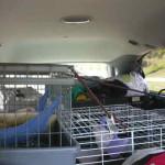 Ohio Ferret Rescue - Ferret Association of Connecticut