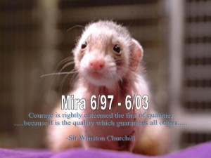 Mira Front Page Image - Ferret Association of Connecticut