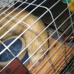 Ohio Ferret Rescue - Quarantine - Ferret Association of Connecticut