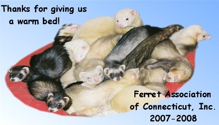 2007 - 2008 Donor Calendar Image - Ferret Association of Connecticut