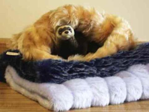 Ferret Luxury Fur Sleeper Ferret Treasures Store