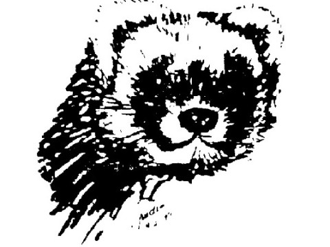 Isabel - Ferret Treasures Store Logo