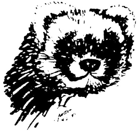 Isabel - Ferret Treasures Logo