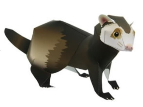 Ferret Treasures Store Ferret Paper Model Sheet to Cut-Out Construct