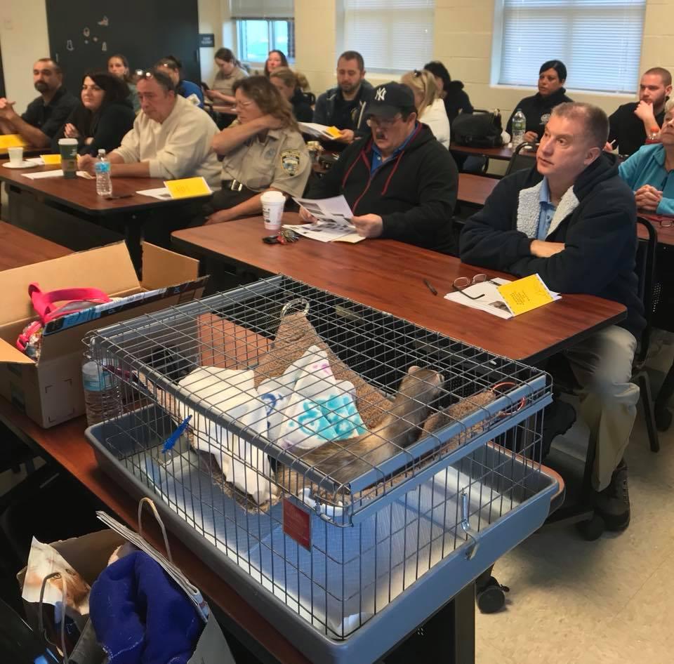 Stratford Attendees Listen to Ferret Presentation