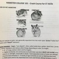 Different Types of Hamsters from the Handout